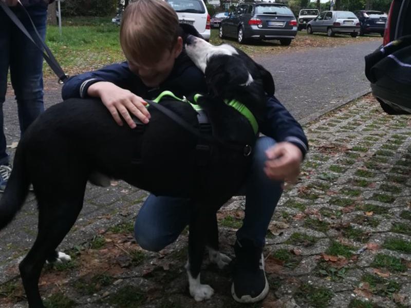 shelta Happy End_Hund Kenny wird empfangen_(c) Familie Saß