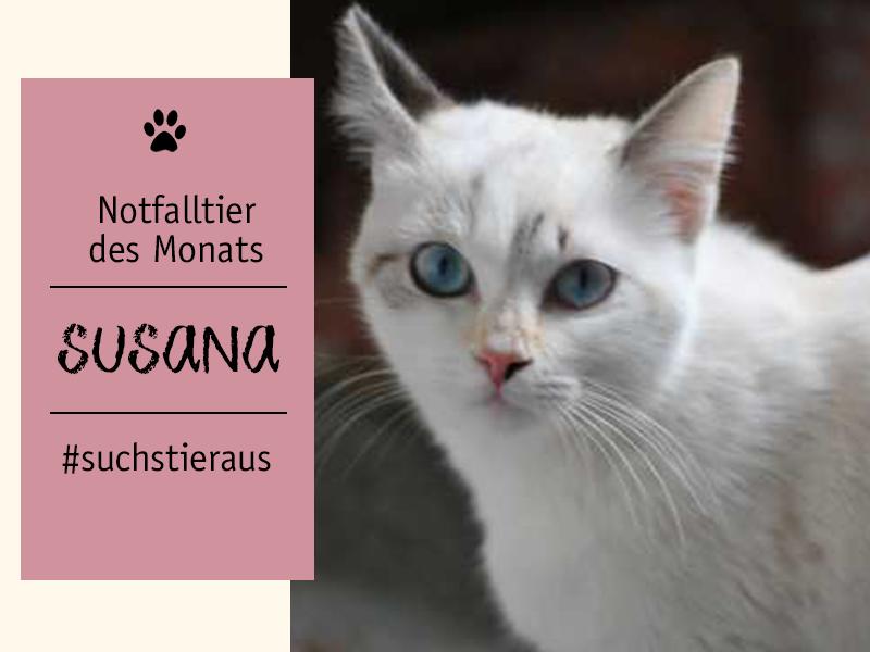 shelta Notfalltier des Monats_Katze Susana