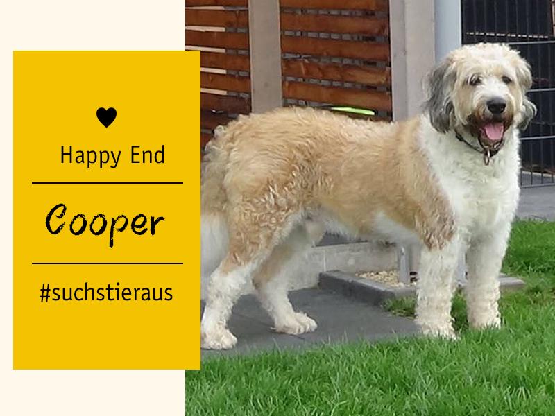 shelta Happy End Hund Cooper (c) Jessica Hespe