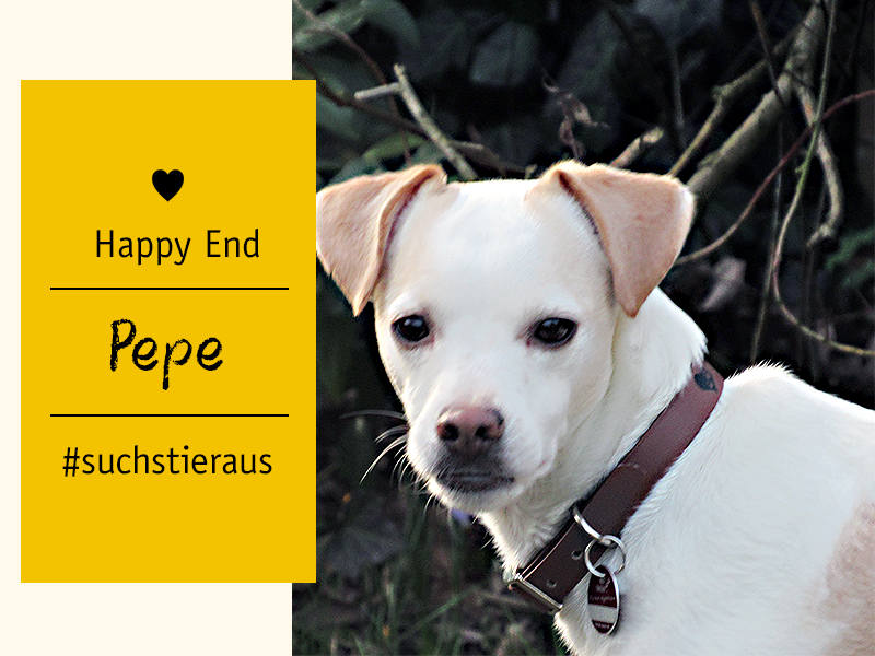 shelta Happy End_Hund Pepe (Ann-Christin R.)