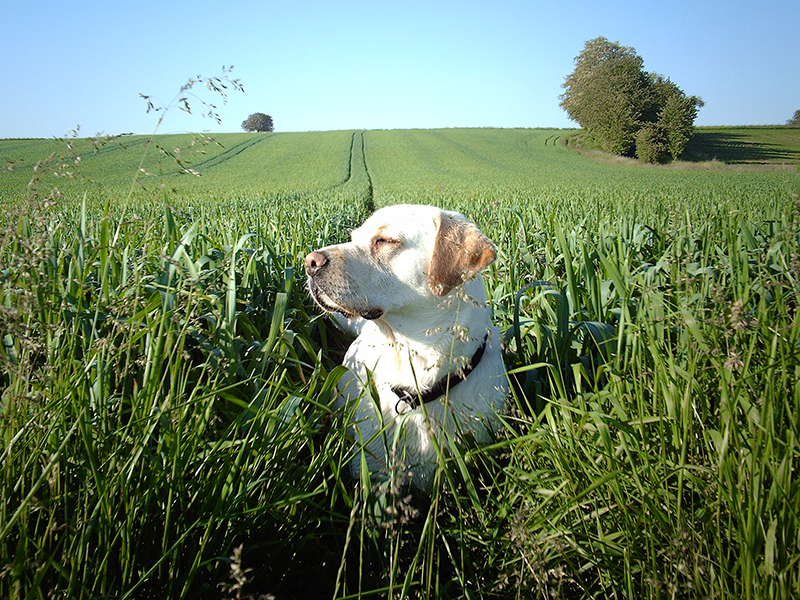 Heuschnupfen bei Haustieren_Hund im Gras(c) Kristin Frey