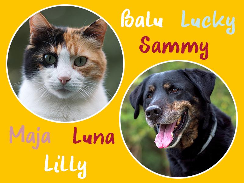 Tierische Namen_Tiernamen Hund und Katze
