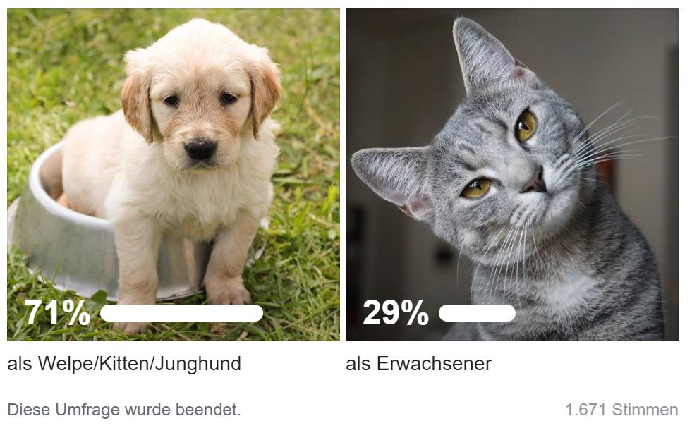 Umfrage_in welchem Alter kam Euer Haustier zu Euch