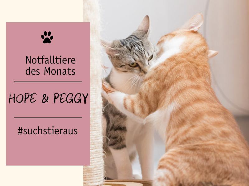 shelta Notfalltiere_Katzen_Hope und Peggy