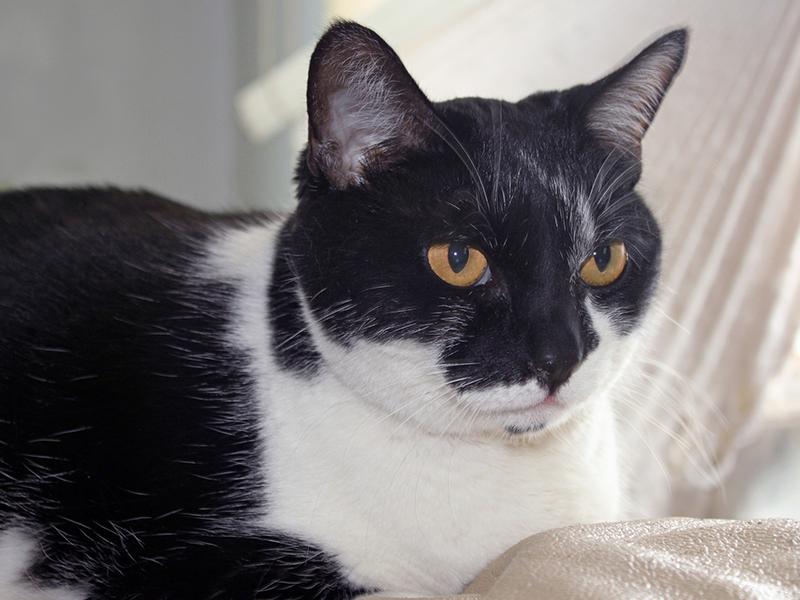 Wenn Katzen alt werden-schwarze Seniorkatze (c)Mary Pahlke_Pixabay