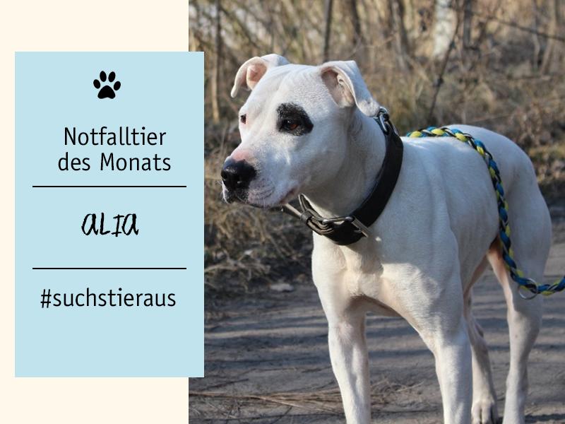 shelta-Notfalltier-Hund-Alia