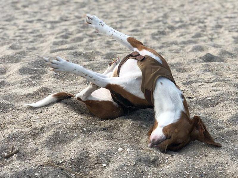 Warum wälzen sich Hunde im Dreck_(C) Michael Funke