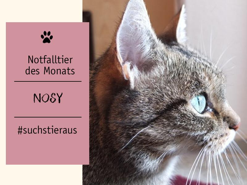 shelta Notfalltier des Monats-Katzenomi Nosy