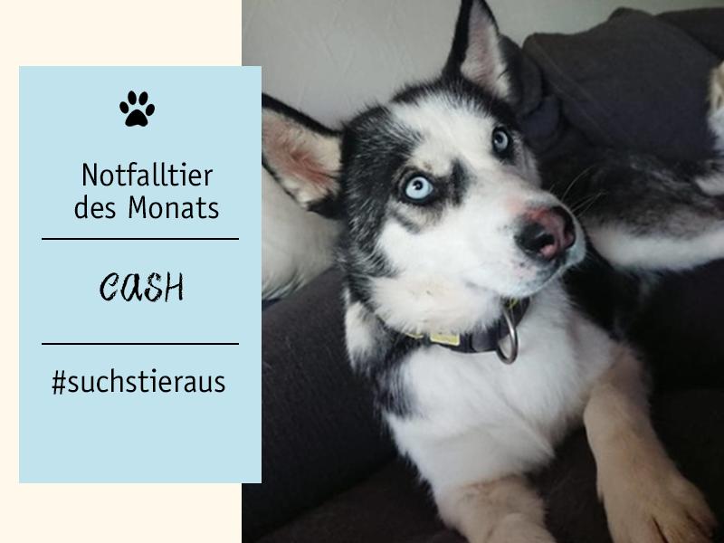 Notfalltier-des-Monats-Hündin-Cash