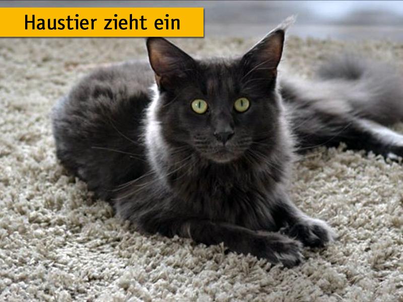 Katze liegt auf einem Teppich.