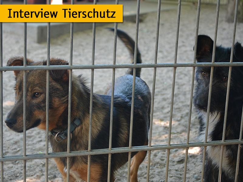 Interview Tierschutz_Hunde im Tierheim