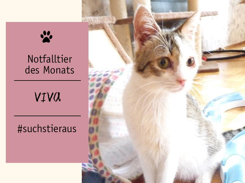 shelta-Notfalltier-Katze-Viva