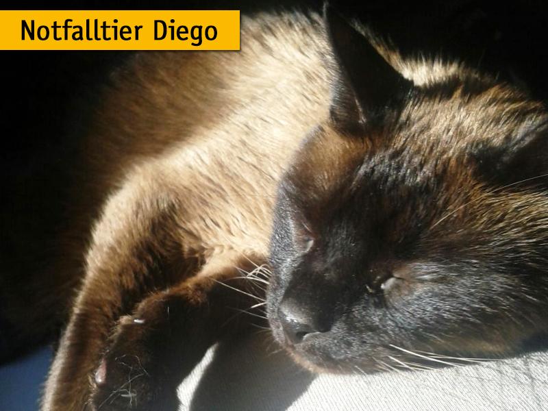 Notfalltier Geschichte Katze Diego_Stefanie Lasner