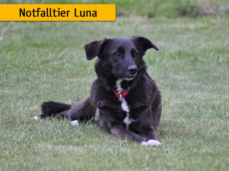 Notfalltier Luna_Notfalltiermonat shelta