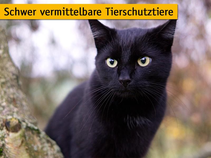 Schwer vermittelbare Tierschutztiere