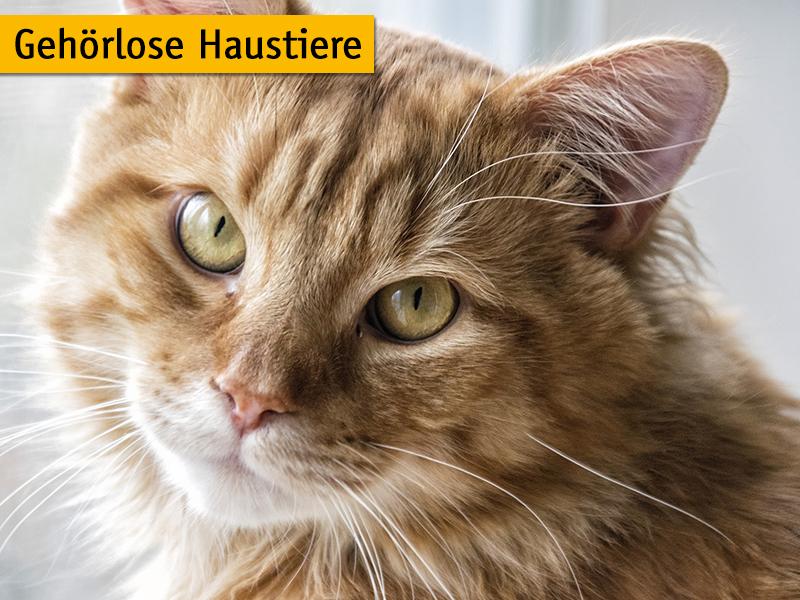 Wenn Hund und Katze taub sind_shelta Tipps_skeeze-pixabay