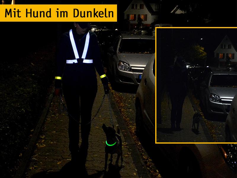Mit Hund im Dunkeln - Tipps fürs Gassigehen