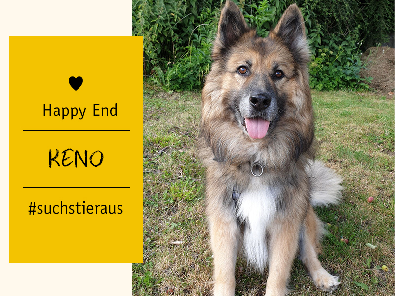 shelta Happy End_Hund Keno_Meike-Enste
