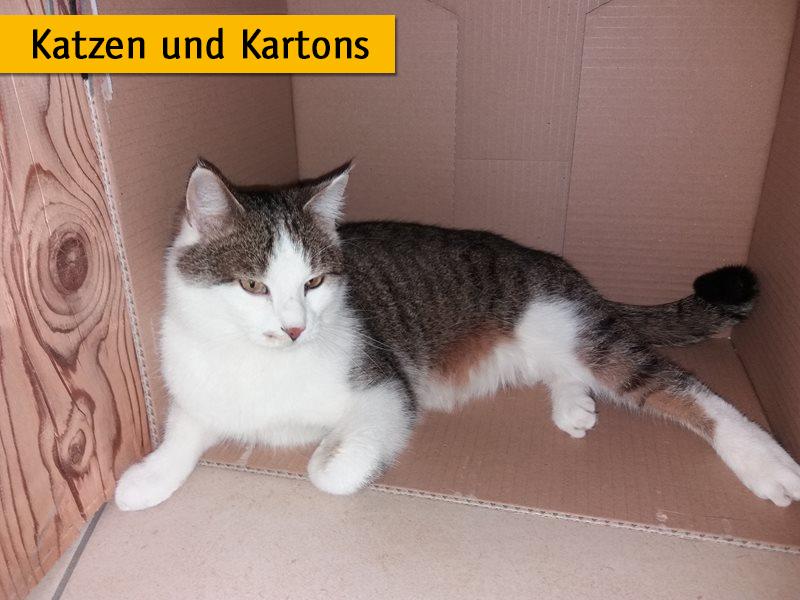Darum lieben Katzen Kartons_Andrea-Bauer