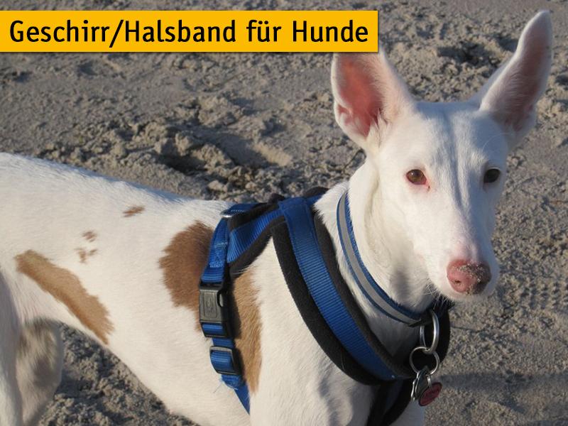 Geschirr und Halsband für Hunde_Petra Kästner