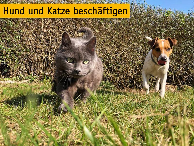 Hund und Katze beschäftigen_Maria Pannenberg