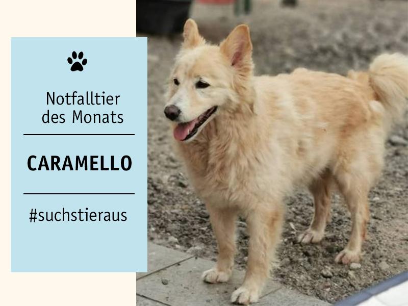shelta-Notfalltier_Hund-Caramello