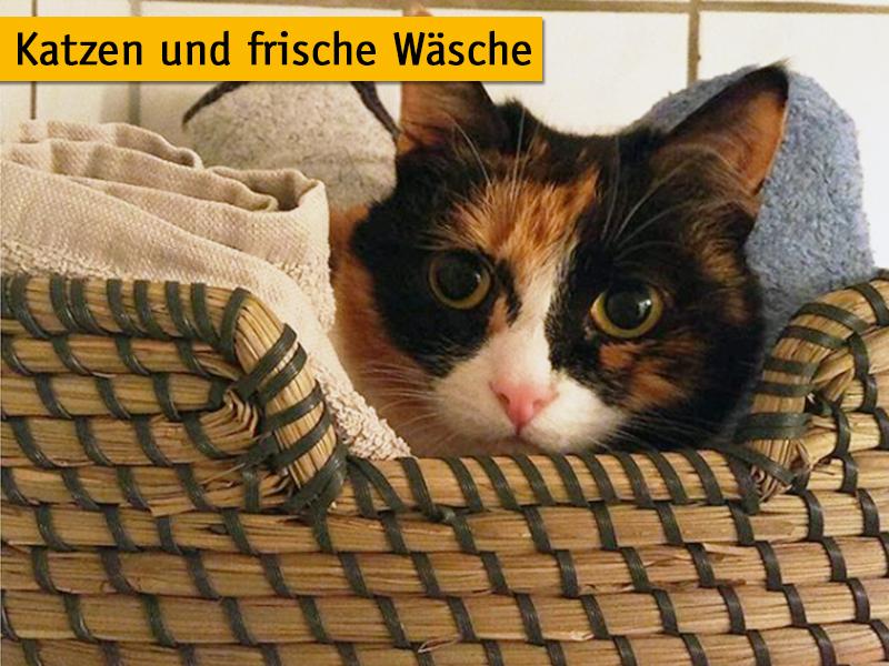 Warum lieben Katzen frische Wäsche und Wäschekörbe
