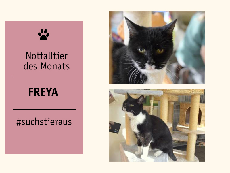 shelta Notfalltier des Monats_Katze Freya