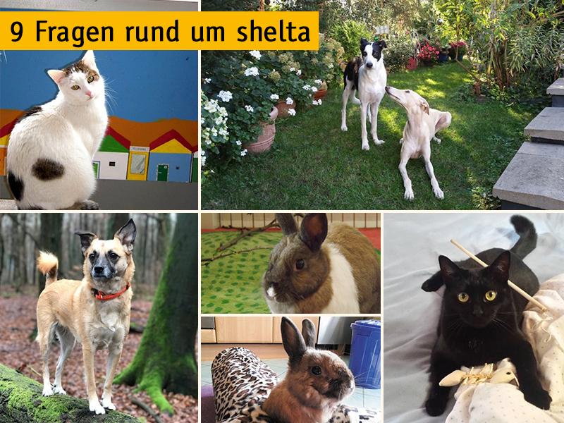 9 Fragen rund um shelta_v. l. n. r. Franz Himmelbauer, Nicole Wania, Nicole Grevenrath, Sabine Hollek, Martina Aschenbrenner, Inga Sander