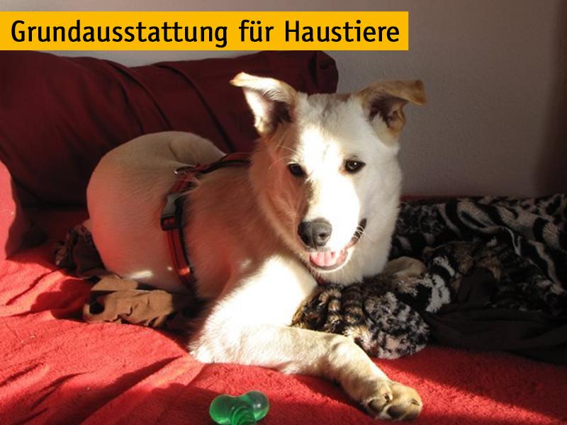 Grundausstattung für Haustiere_Günter Rokasky