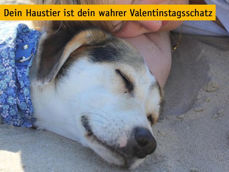 Haustier Valentinstagsschatz_Hund mit Mensch_(c) Nadine Volk