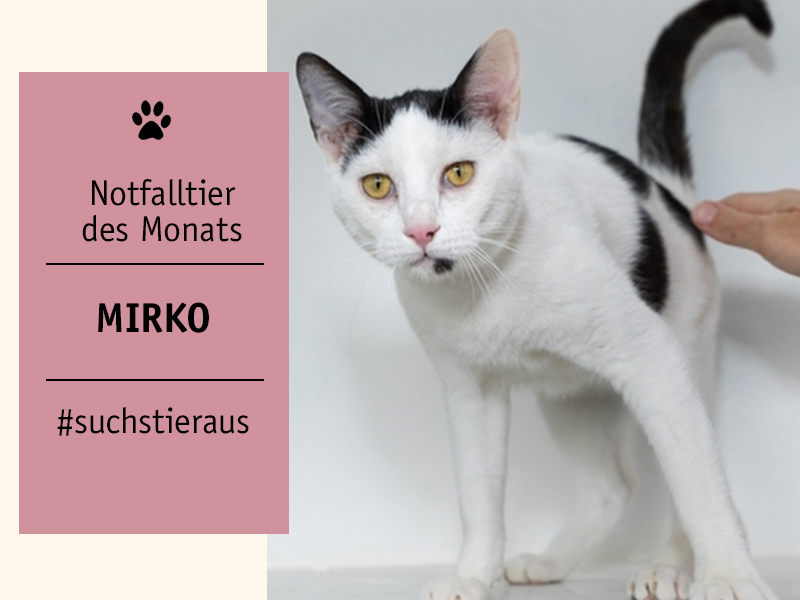 shelta_Notffaltier_Kater-Mirko_Tierhilfe Anubis