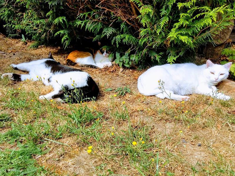 Leben mit drei Katzen (c) TASSO