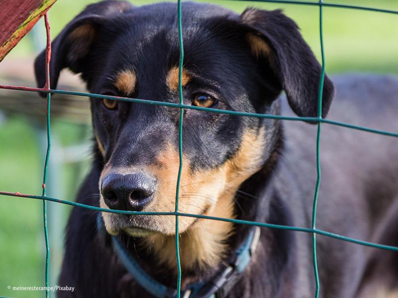Tierheime in Corona-Zeiten_Hund im Tierheim_meineresterampe-pixabay