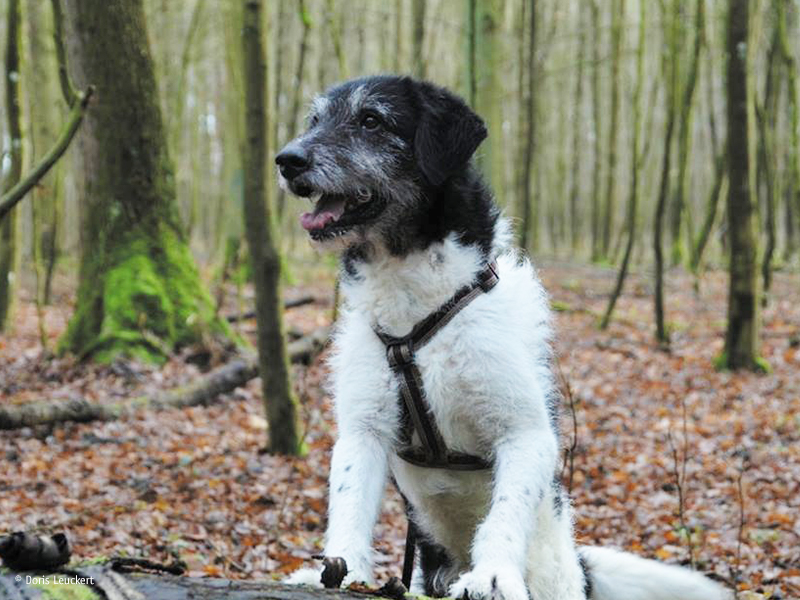 Wandern mit Hund_(c) Doris-Leuckert