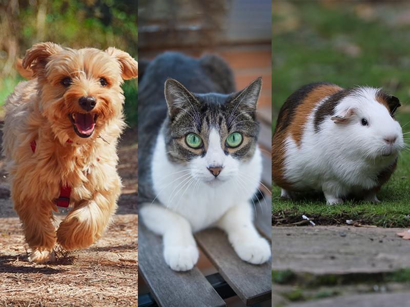 Welches Haustier passt zu mir_Tipps für die Entscheidung
