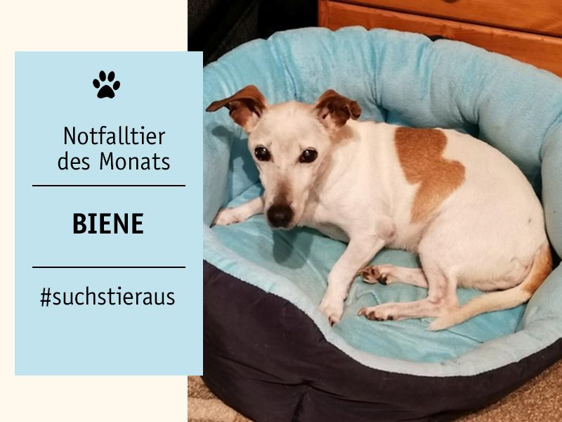 shelta-Notfalltier_Hund-Biene_TierheimRuesselsheim