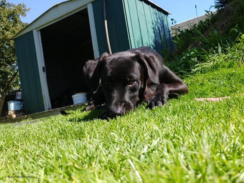 Hundefreundlicher Garten_Hund im Garten