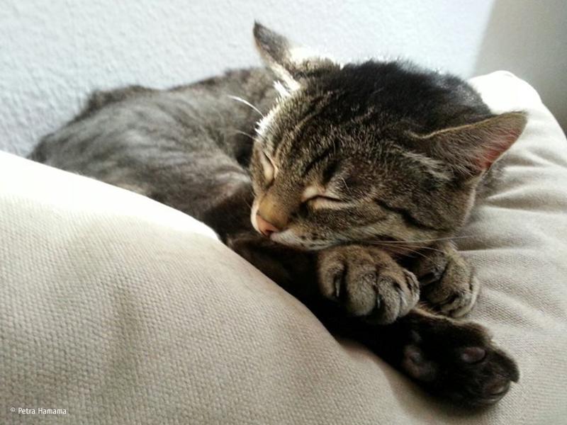 Katze schläft auf Sofa_Petra Hamama
