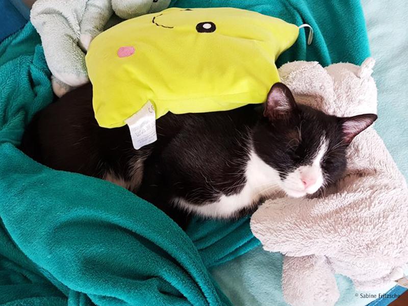 Katze schläft mit Kuscheltier_Sabine Fritzsche