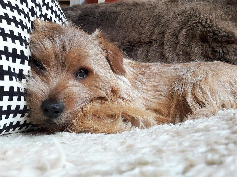 Hund entspannt sich_Ratel76-Pixabay