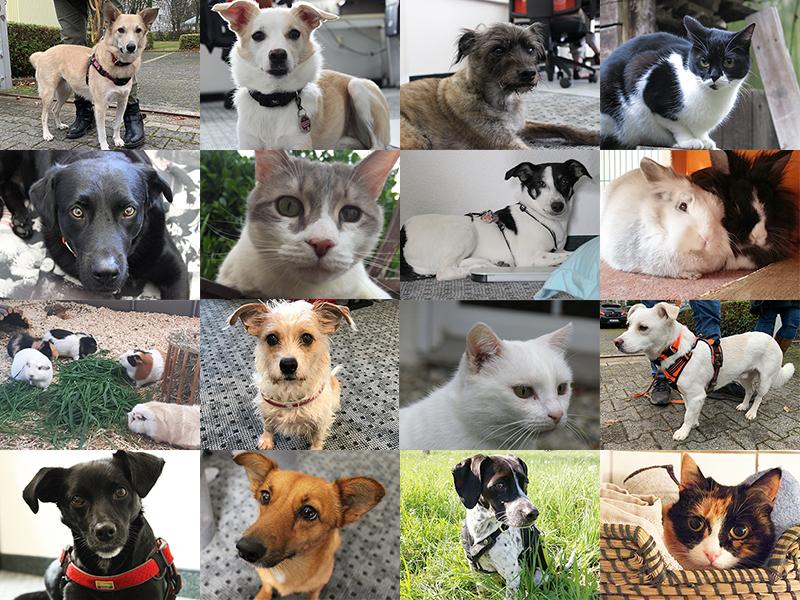 Tierschutzgeschichten_Hunde-Katzen-Kleintiere