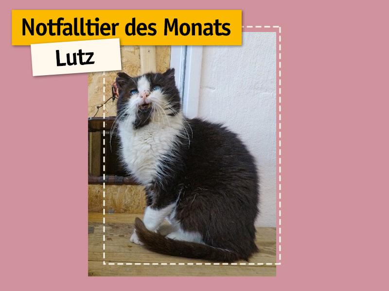 shelta_Notfalltier_Katze-Lutz