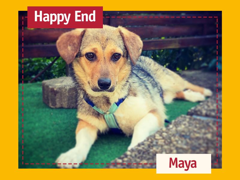 shelta Happy End_Maya-Svenja Friedrich
