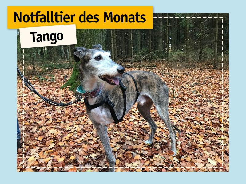 shelta Notfalltier_Hund_Tango im Wald_dreibeinig