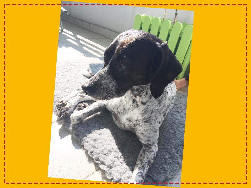 Schnauzensicht_Hund Dotty liegt auf dem Balkon