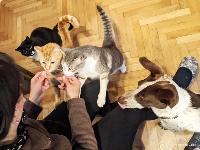 Huendin Hope mit Katzen aus dem Tierschutz_©Stephanie Jakob