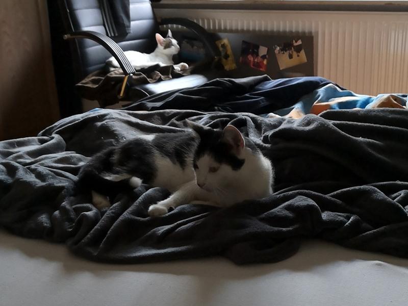 Kater Sid und Micky entspannen sich im Schlafzimmer
