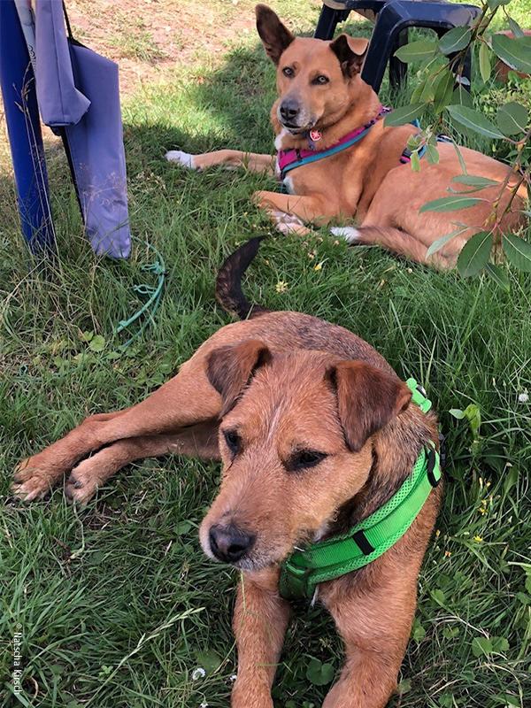 Notfalltier-Hunde_Floki und Kara_Natascha Kirsch