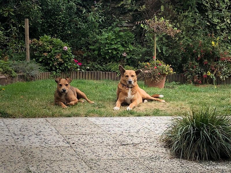 Notfalltiere-Hunde_Floki und Kara_Natascha Kirsch